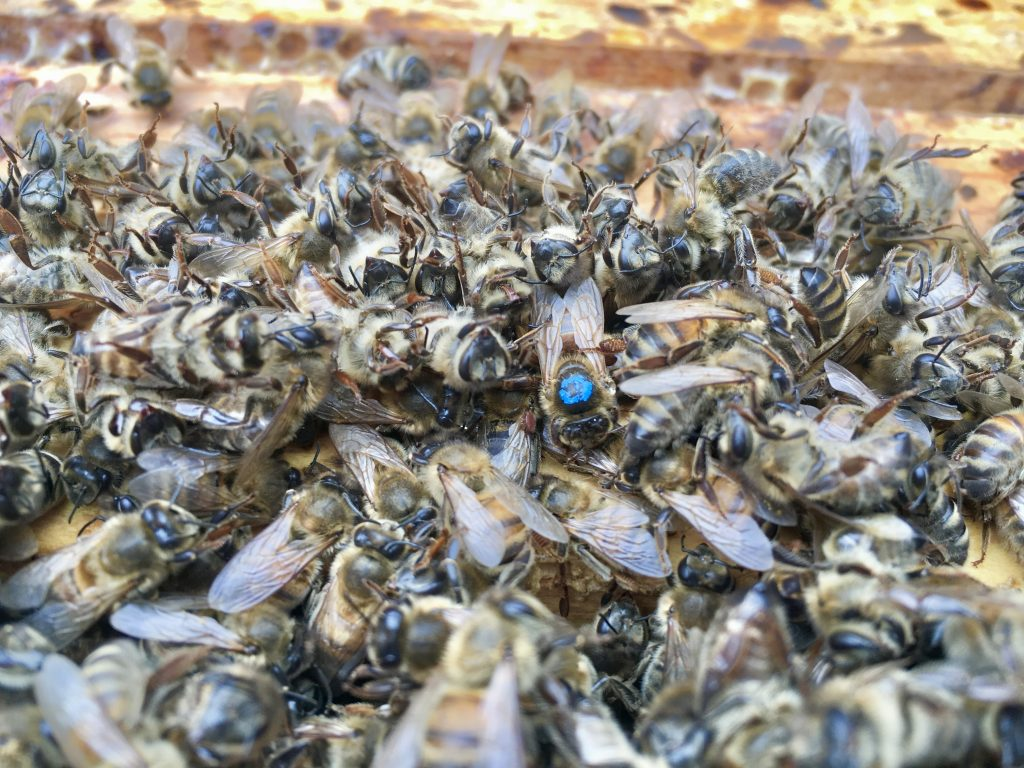 Failed Winter hive